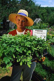 plant propagation techniques plant by plant-free plants!