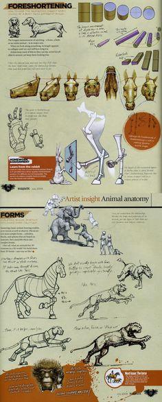 Animal Anatomy- By Marshall Vandruff, Pg. 3 drawing art, animal anatomy, anim anatomi, animals anatomy, marshal vandruff
