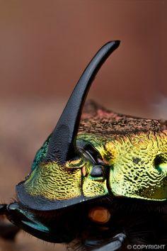 beetle detail