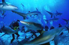 Swim with Sharks #JetsetterCurator