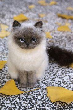 NF kitten