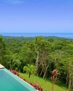 Catch a glimpse of hummingbirds, macaws, and monkeys in Costa Rica.