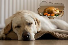 Dog Thanksgiving Tip