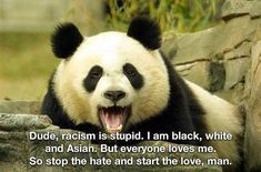how politically correct you are mr panda