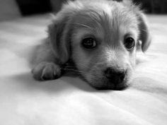 Awe tiny baby pup.