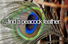 peacock themed wedding, peacock feathers, bucketlist, buckets, the zoo, farms, themed weddings, zoos, bucket lists