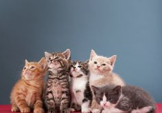 Daily Cute: Foster Kittens Find Love