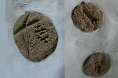 Homemade Fossils - http://www.pbs.org/parents/crafts-for-kids/homemade-fossils/