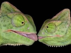 """""""The lizard"""" kiss: One of our least favorite kinds of smooches"""
