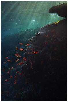 amazing (under water)
