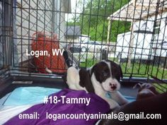 URGENT!! Tammy needs you to help her find her forever home. Please share!! Not much time for these poor babies. Logan County WV logancountyanimals@gmail.com