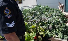 Vancouver police have opened a new rooftop vegetable garden to help officers reduce stress