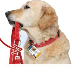 Dog Collar ID