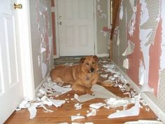 When updating your wallpaper, it's very important to remove old wallpaper completely. The best method, surprisingly, is a solution of hot water and fabric softener. The worst method, not surprisingly, is to leave your dog home for the weekend.