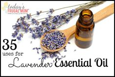 Come and see 35 ways you can use lavender essential oil! :: Today's Frugal Mom™
