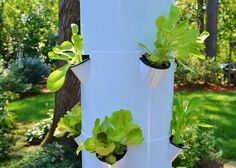 Veggie Garden Diversification with the Tower Garden - Redeem Your Ground | RYGblog.com