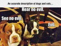 The Evil Among Us