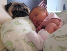 Cute Babies with Cute Dogs