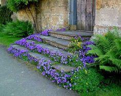 fern, front steps, cottag, secret gardens, stone steps, blue flowers, purple flowers, garden stairs, step up