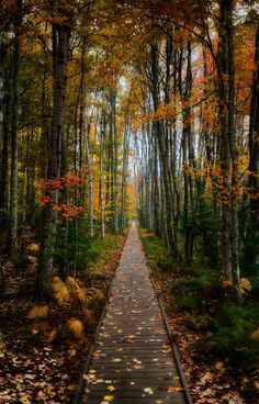 A walk in the woods by Michael Steighner on Fivehundredpx. Fall color in Acadia National Park, Maine.