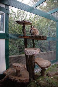 Great rabbit housing