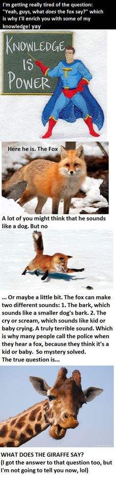 What the fox really says…