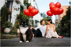 One Purrfect Engagem
