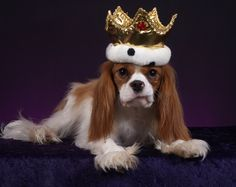 Haha....this is what Bentley thinks he is...King!