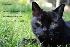 cat nuzzles