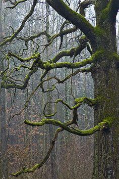 Im Reich der freundlichen Riesen by tiegeltuf on Flickr
