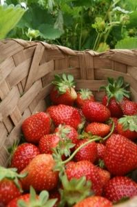 """If you're wondering where you can get your hands on some fresh berries or find local produce in Oklahoma, we've made that information easy to find in our """"Savor the Flavor"""" article. Just click on those delicious looking strawberries to learn more."""