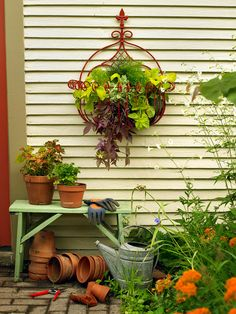 Containers: Combine draping plants with different foliage colors and textures such as burgundy sweet potato vine, licorice plant and asparagus fern.