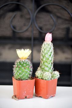 Live Set of 2 Cactus with Flower  Easy to Care    by 9GreenBox, $8.99