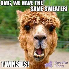 Craft Humor :)  #alpaca #alpacahumor #fiber #wool #spinning #yarn #sweaters #babyalpaca #roving