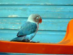Turquoise orange and birdie