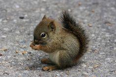Peanut!!!