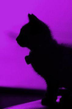 Black cat silhouette on purple