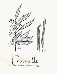 Cannelle 85x11 Collection Art culinaire by evajuliet on Etsy, $22.00
