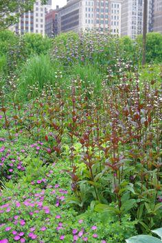 flowering plants, luri garden, plant combo