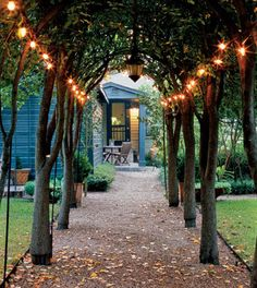 String lights on trees to make a charming entry path