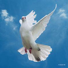 Fly Away - Stunning Photo !