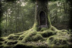 fairy houses, tree houses, treehous, gnome home, trees
