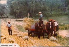 work, field, amish farmer, amish countri, amish life