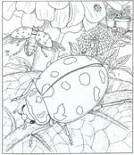 Nature Printable Coloring Sheets - thanks to Kids-n-Fun.com