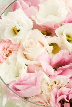 English Roses !