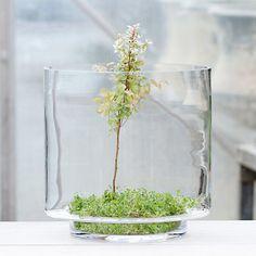 fairi garden, 127001, garden terrarium, glass, gardening, concern garden, indoor garden, skyview terrarium, gardenoutdoor garden