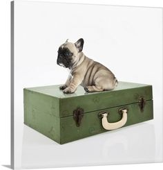 French Bulldog puppy sitting on an old travel case