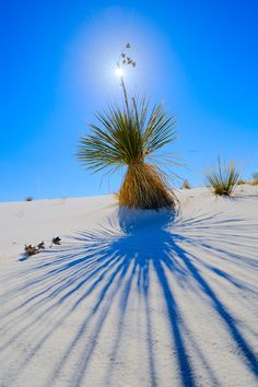 White Sands National Monument, New Mexico; photo by Igor Menaker