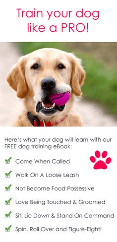 Puppy Training Tips @Pascale Lemay Lemay Lemay De Groof