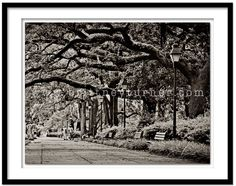 Savannah Georgia #Georgia #Savannah